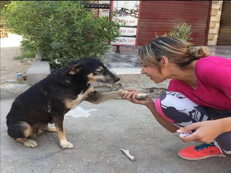 مشوار الألف ميل يبدأ بخطوة.. شابة مصرية تمنع حملات تسميم حيوانات الشارع