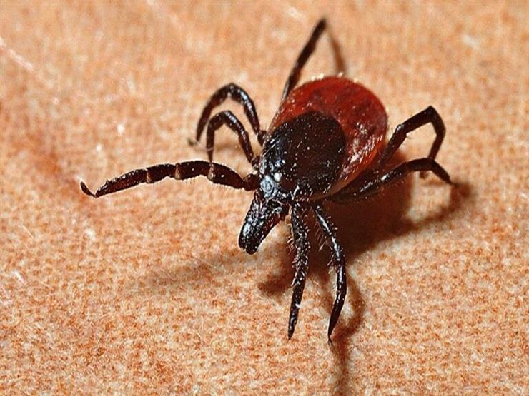 """""""المقلد العظيم"""".. دراسة تحذر من جائحة جديدة تنتقل عبر لدغة الحشرات إلى البشر thumbnail"""