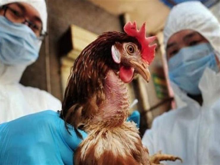 بخلاف كورونا.. الصين تسجل حالات إصابة بإنفلونزا الطيور