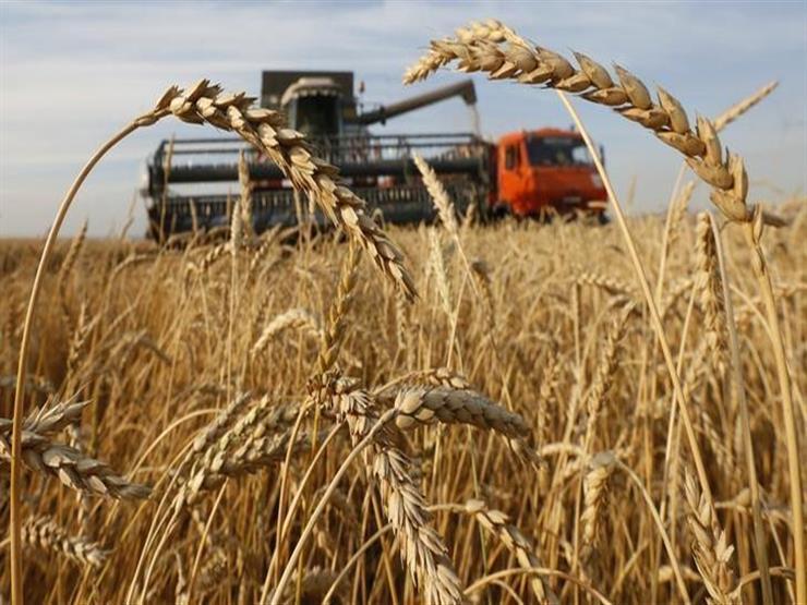 محافظ المنيا: زراعة 241 ألف فدان قمح