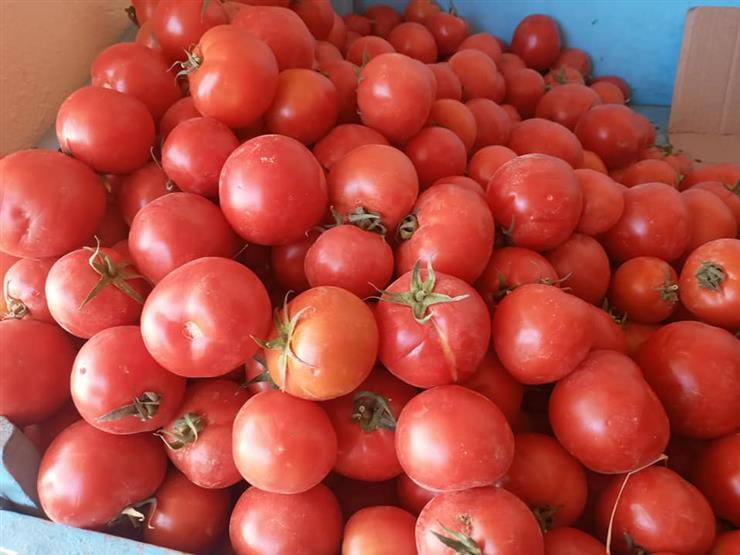 تراجع الطماطم والبطاطس.. أسعار الخضر والفاكهة في سوق العبور اليوم الاثنين
