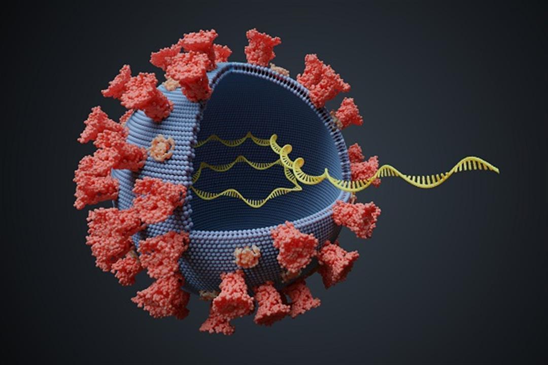 بعد اختفاء الأعراض.. ما مدة بقاء فيروس كورونا في جسمك؟