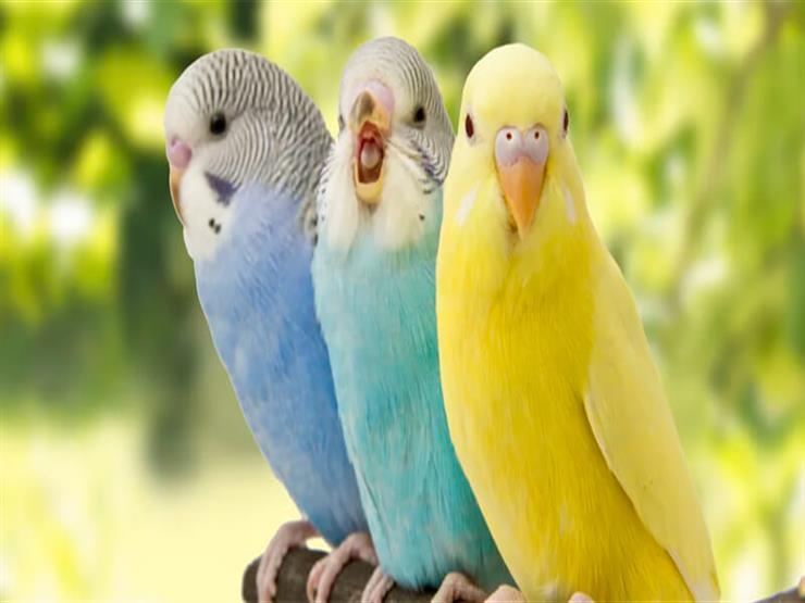 هل يمكن أن تصاب الطيور بالبرد أيضا؟