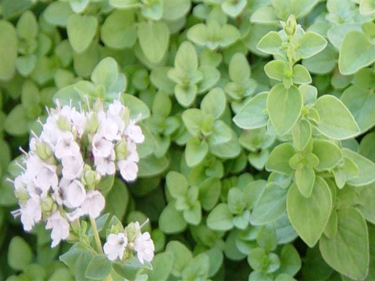 ارتفاع صادرات النباتات الطبية والعطرية.. وتوقعات بتوسع مصر في هذا المجال