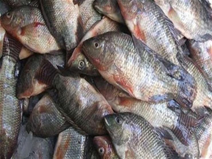 ضبط 7 أطنان لحوم وأسماك فاسدة خلال حملة في القليوبية