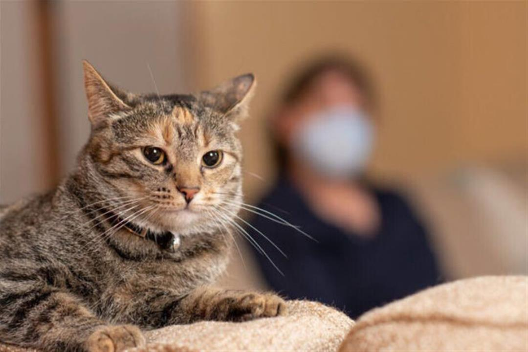 """ابتعد عن حيوانك الأليف.. توصية جديدة من """"الصحة العالمية"""" لمرضى كورونا"""