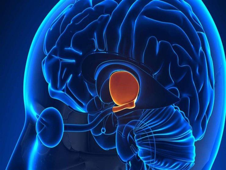 مرض جيني جديد يؤخر نمو دماغ الأطفال.. علامات على الآباء الانتباه إليها