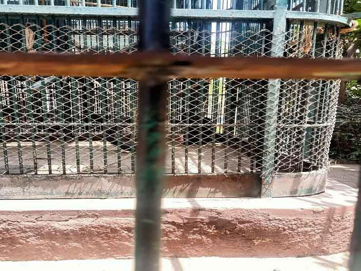بعد إغلاقها في العيد.. فيروس كورونا يكبد حديقة حيوان الجيزة خسائر كبيرة - (صور)