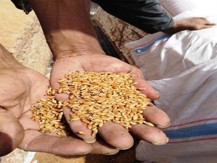 محافظ الغربية: انتظام توريد القمح بعد إجازة عيد الفطر المبارك