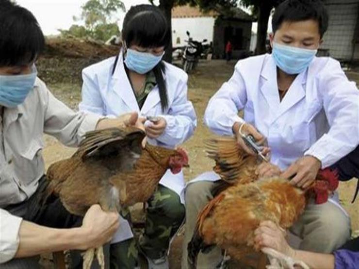 الصين تعلن عن تفش جديد لإنفلونزا الطيور في منطقة التبت