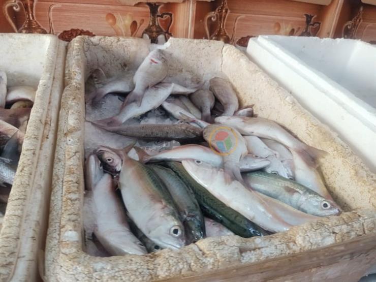 تراجع البلطي والجمبري.. أسعار الأسماك في سوق العبور اليوم الخميس
