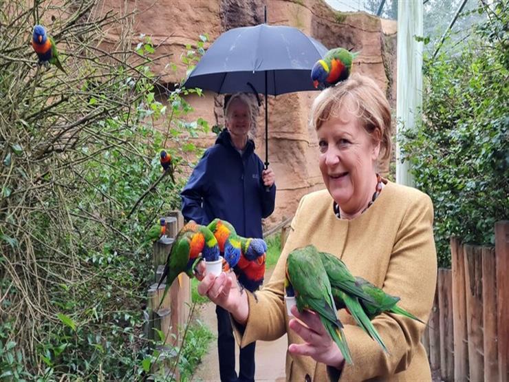 """""""زيارة الوداع"""".. ميركل تنهي مشوارها السياسي بالاستمتاع مع الطيور"""