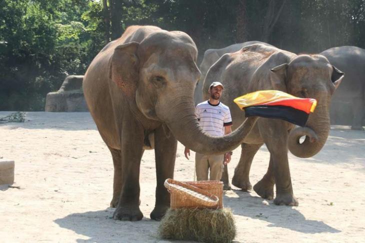 الفيل ياشودا يرشح ألمانيا للفوز على البرتغال في يورو 2020 (صور)